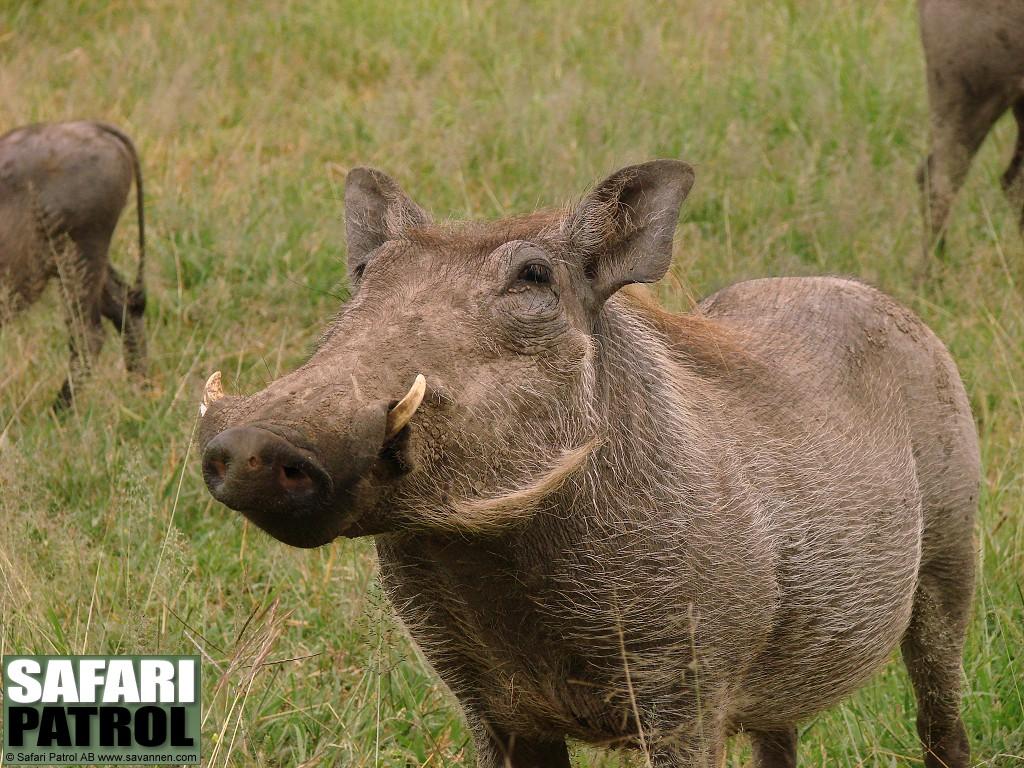 safari | Euro Palace Casino Blog