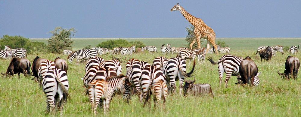 djur på savannen