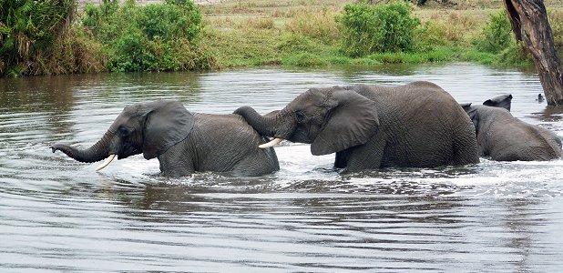 vad äter elefanter