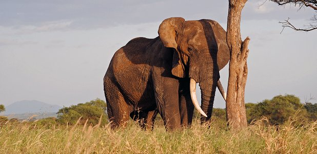Pa jakt efter elefanter